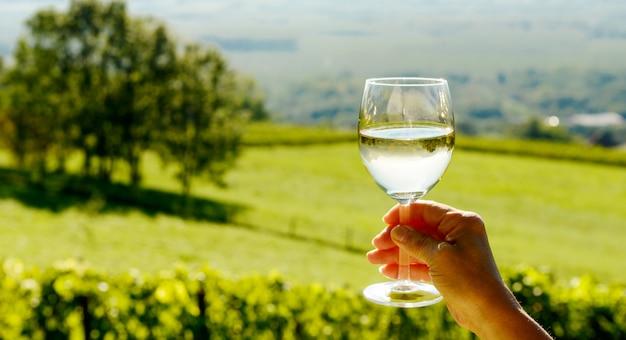 太陽に向かって露出した白ワインのグラス