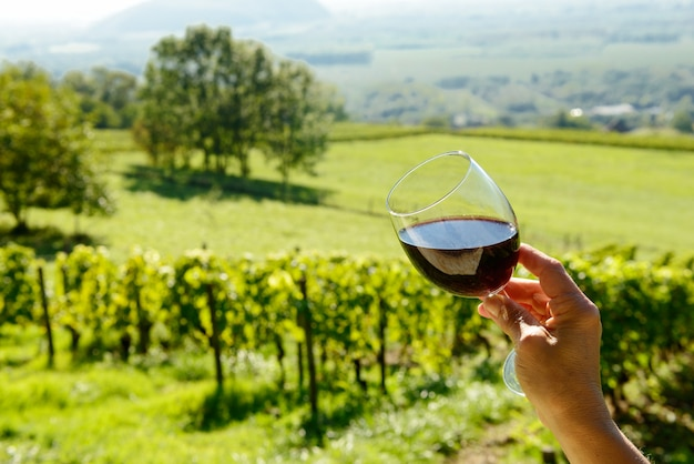 太陽に向かって露出した赤ワインのグラス