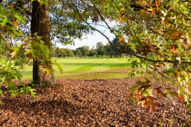 秋のゴルフコースのツリー