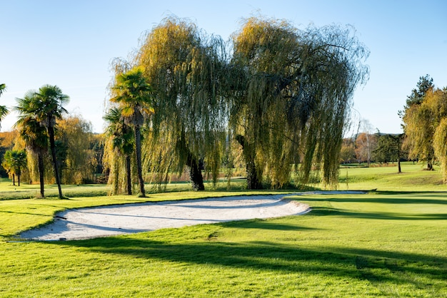 木とゴルフコースのバンカー
