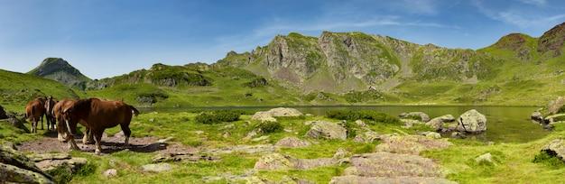 放牧馬と山の風景