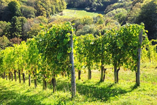 フランスのピレネー山脈のジュランソンワインのブドウ園