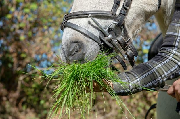 馬に草をあげる女
