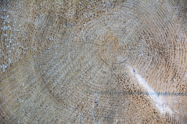 木の木の質感の背景