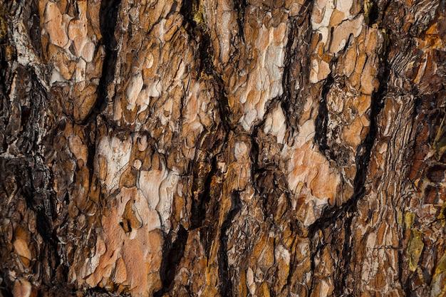 赤い松の樹皮の背景