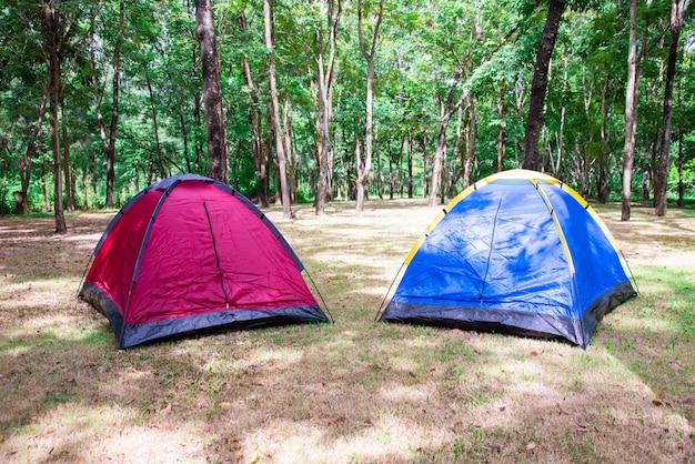 Кемпинг и палатка под деревом в утренний восход.