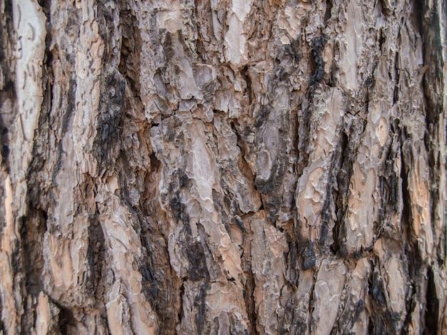 クローズアップ、茶色、樹皮、樹皮、自然