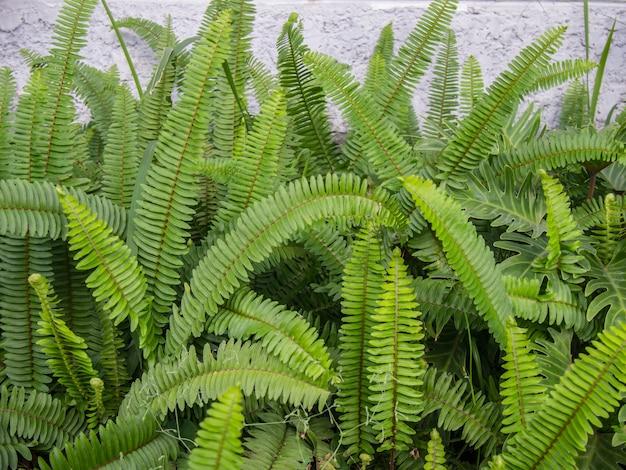 庭の緑の草と緑のシダ。花畑のシダの植生