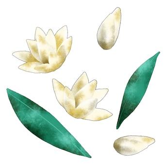 チューベローズの花の分離