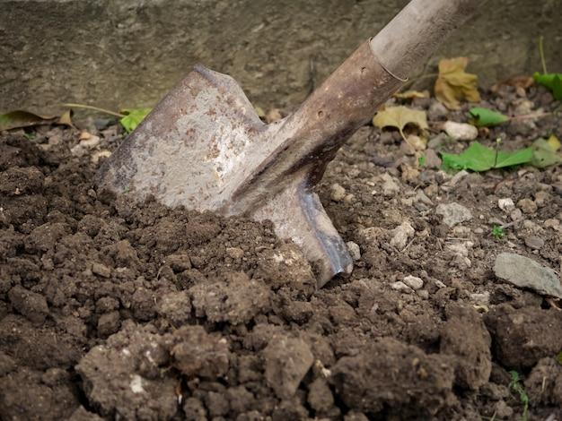 秋にシャベルで庭を掘る