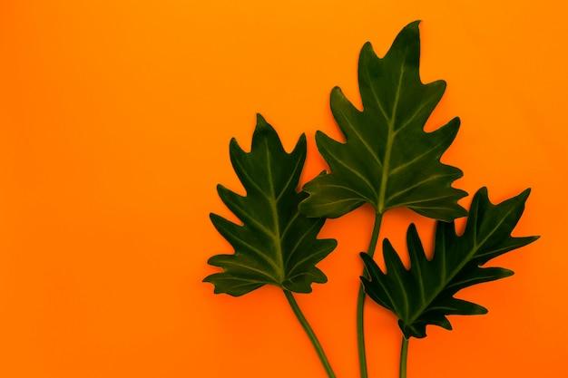 熱帯の緑の葉でスタイリッシュなインテリアデザイン。