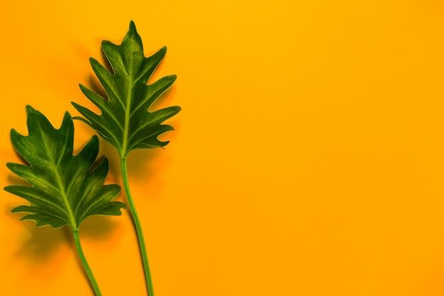 黄色の背景とコピースペースの緑の葉。