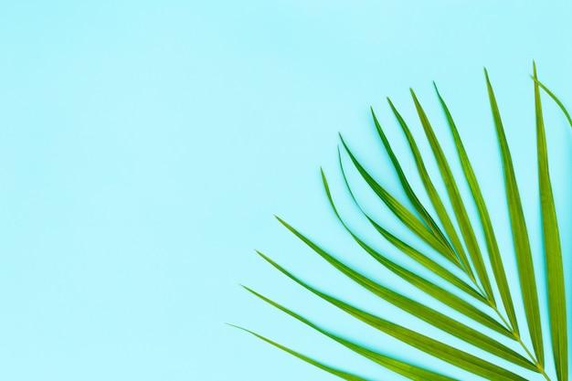 青の背景にヤシの木の緑の葉
