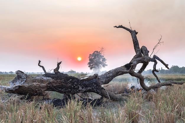 Сгоревшая трава и дерево на лугу во время заката