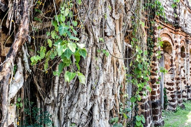 Деревья растут на старой двери в таиланде