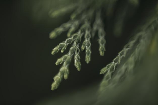 モミの木と柔らかな光で緑の背景を作る葉と枝