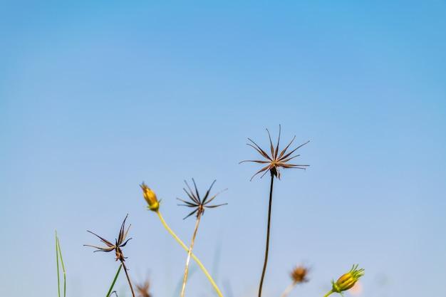 花の美しさ夏の息