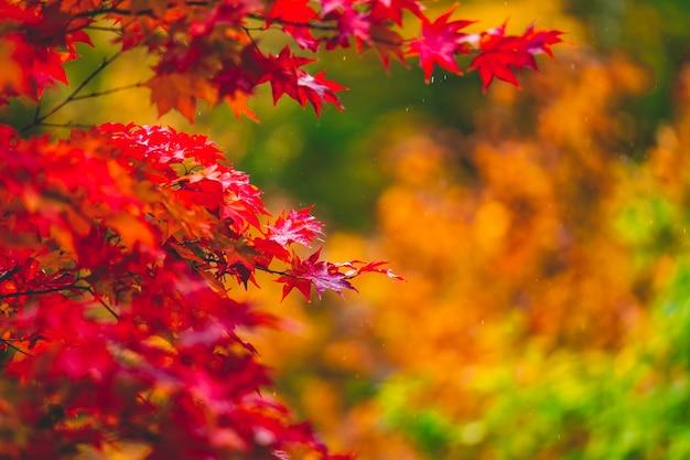 日本の秋の季節の間の赤い葉の色