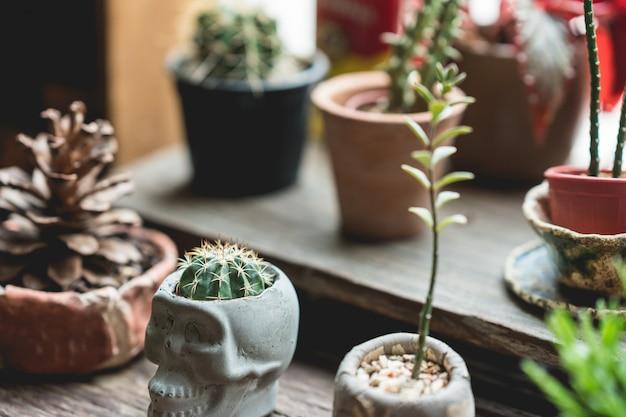 Маленький кактус в горшках с подсветкой