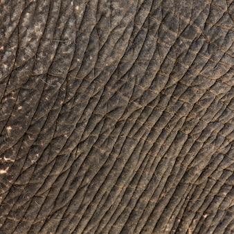 背景の象の肌の質感