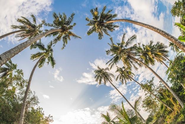 Кокосовая пальма и голубое небо.