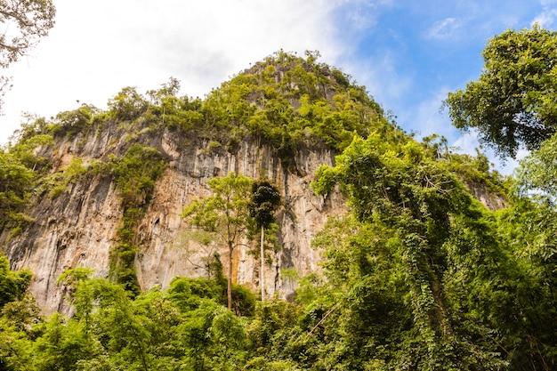 浸透熱帯林の岩山