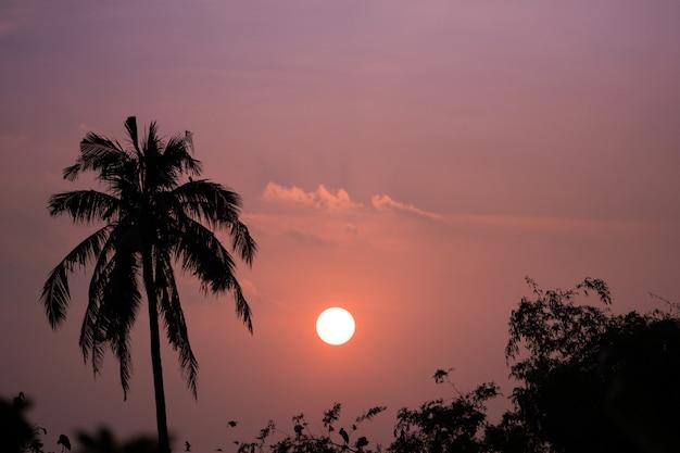Силуэт кокосовой пальмы и закат фоне неба
