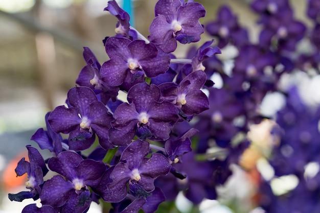 紫色の蘭の花のクローズアップ
