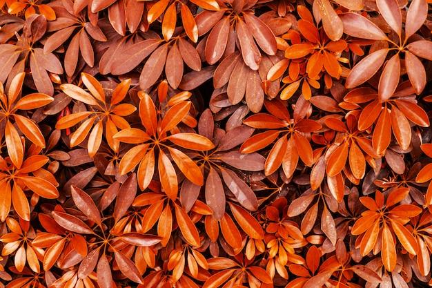赤い葉の木の背景