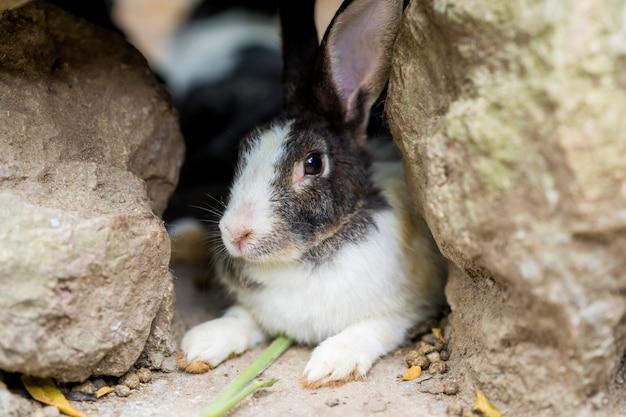 ファーム内のかわいいウサギをクローズアップ