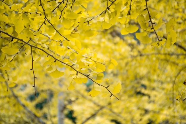 黄色の葉と枝のクローズアップ