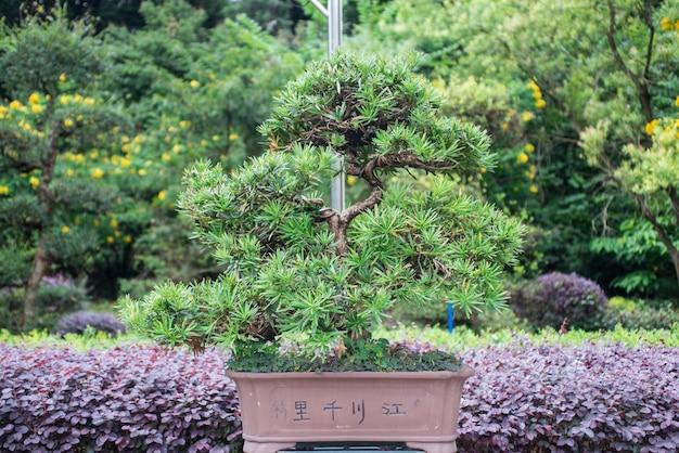 庭に成長盆栽の木