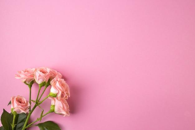 Розовые розы на пастельно-розовом фоне