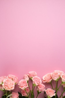 Розовые розы цветы на фоне пастельных роз. плоская планировка