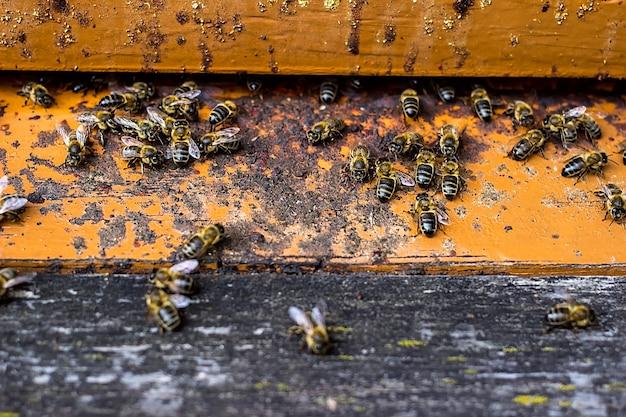 ミツバチは蜂の巣から出入りします