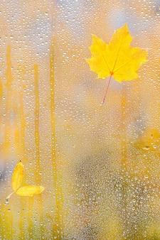 水滴とガラスの秋のカエデの葉