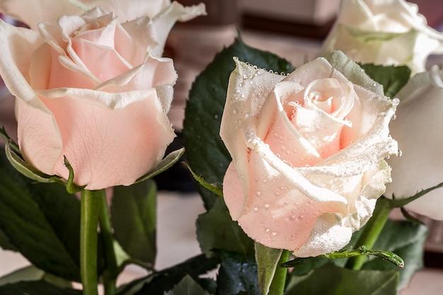 Красивая розовая роза с листьями