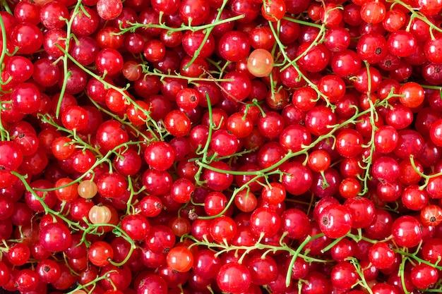熟したジューシーな赤スグリの果実の背景