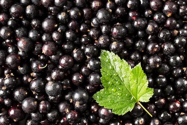Смородина черная. ягодная поверхность. текстура свежей органической смородины
