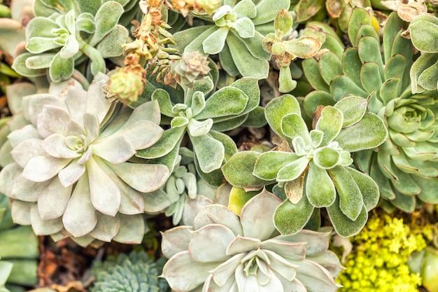 庭のさまざまなサボテンリュウゼツラン多肉植物