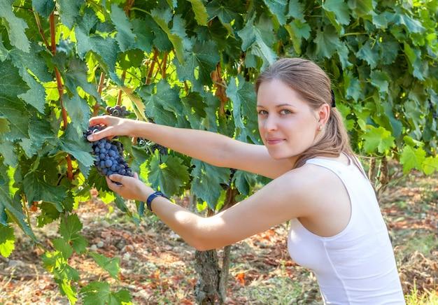 若い女の子は、ブドウの収穫、ブドウ園、農業を収集し、