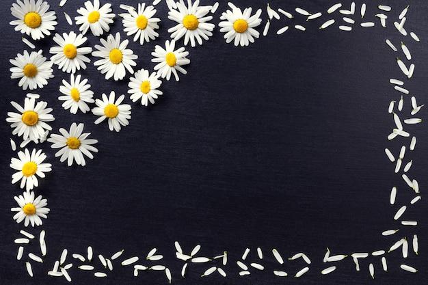 Прямоугольная рамка из белых ромашек на черном фоне. цветочный узор с копией пространства лежал плоско. цветы вид сверху.