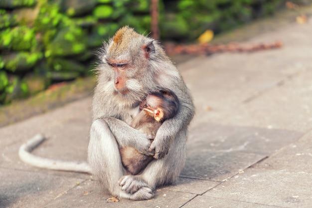 公園で赤ちゃんと一緒に猿