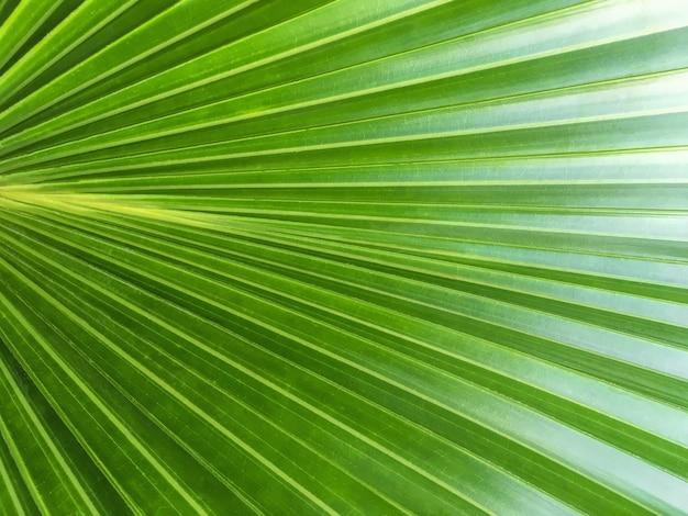 緑のヤシの葉の質感