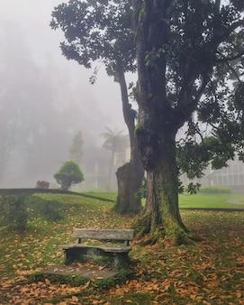 霧の朝の秋の風景。霧の中の森。