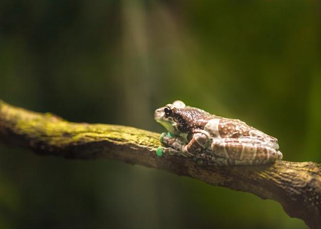 大きな茶色のカエルは枝に座り、日光を浴びます。
