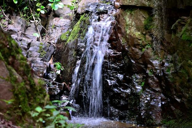素敵な貴重な自然の平和の滝
