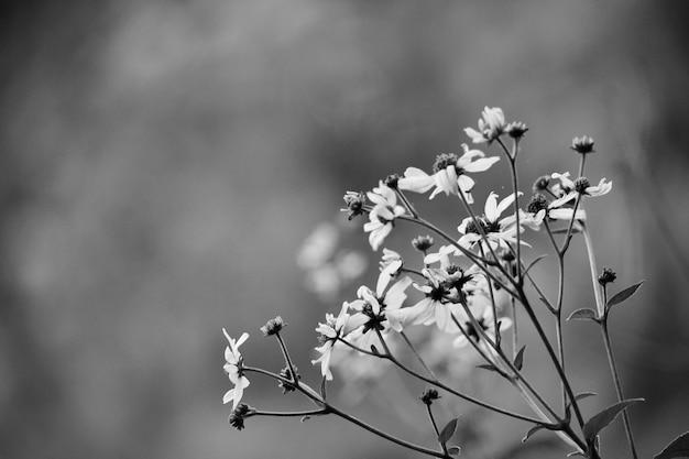 素敵な庭園美しい花の花びら