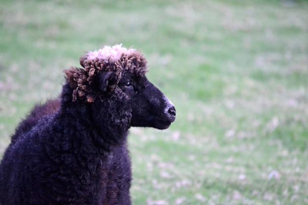 美しいプロフィール動物の平和ブラック