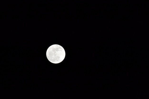 かわいい白い夜ムーンオオカミ